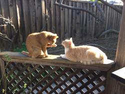 Gazebo cats