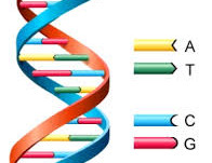 Epigenetische Heilung mit Präzisionsresonanzen