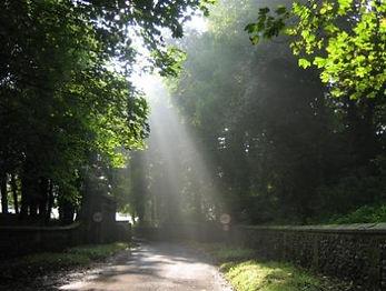 LJ2 Sunlit Lane.jpg