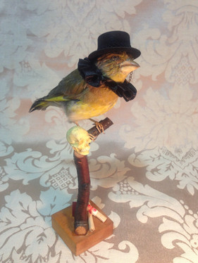 Shakespere inspireret fugl