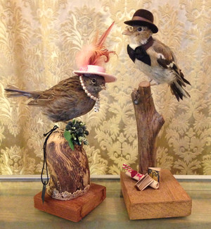 Fairytailor Fugle