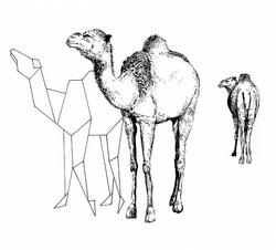 dessin Beaucrew