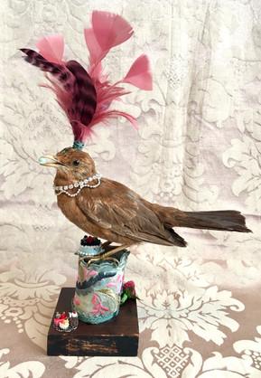 Denne smukke fugl var en gave fra en mor til sin datter, som netop var blevet uddannet til konditor. Så vi gik med kager - masser af kager.