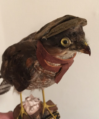 Fairytailor Fugl