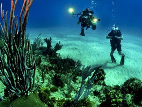 Diving into Mega Metadata for Coral Reef Research
