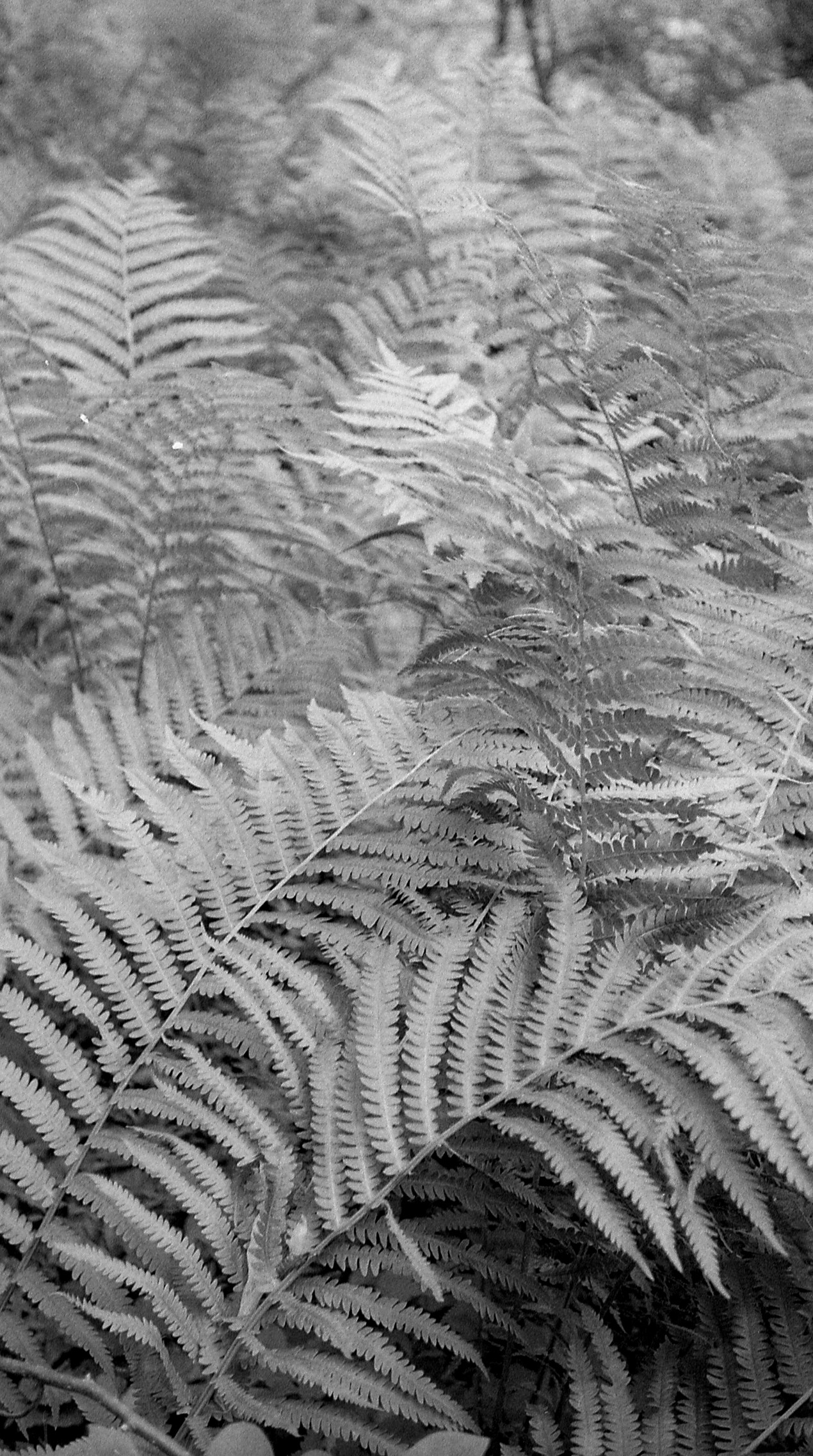 Fern in the forest.