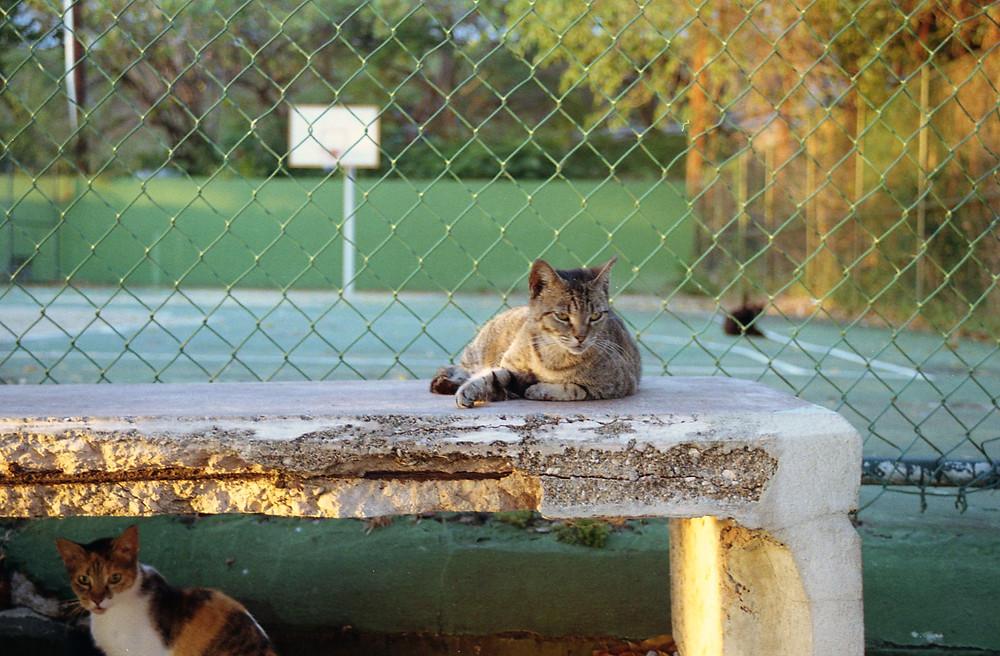 cat gang of Old San Juan