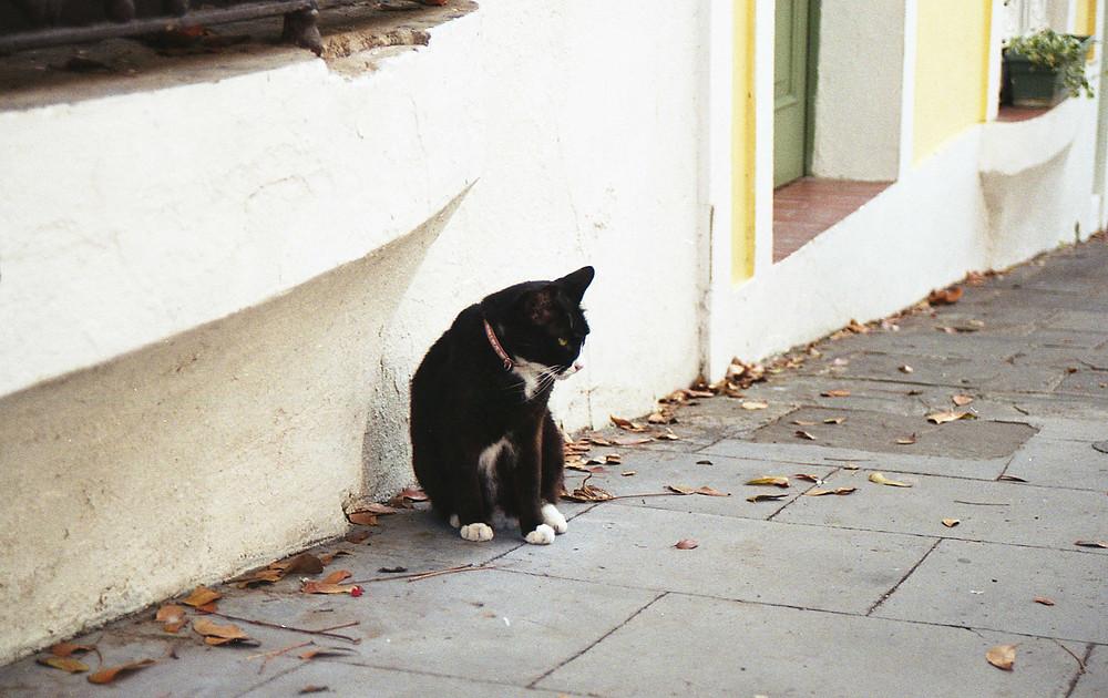 cat in Old San Juan, Puerto Rico