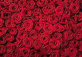 Red_Roses_Beautiful_Background.jpg