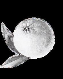 SweetOrange (1).png