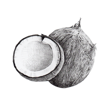 Coconut (2).png