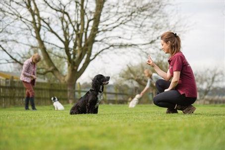 Elin Best puppy training