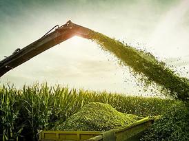 corn%20silage_edited.jpg