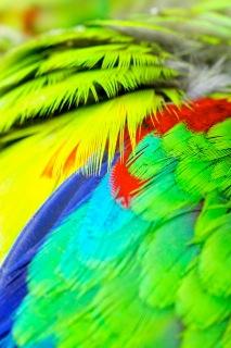parrot fashion