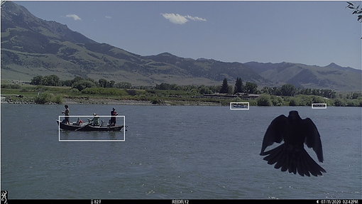 Boat and Bird.png