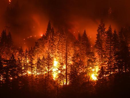 Lindando Com Incêndios Florestais