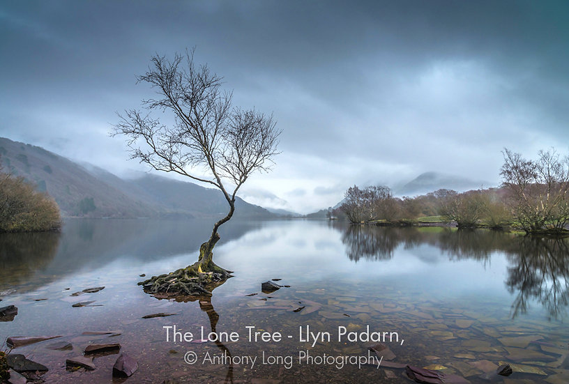 The Lone Tree, Llyn Padarn, Llanberis