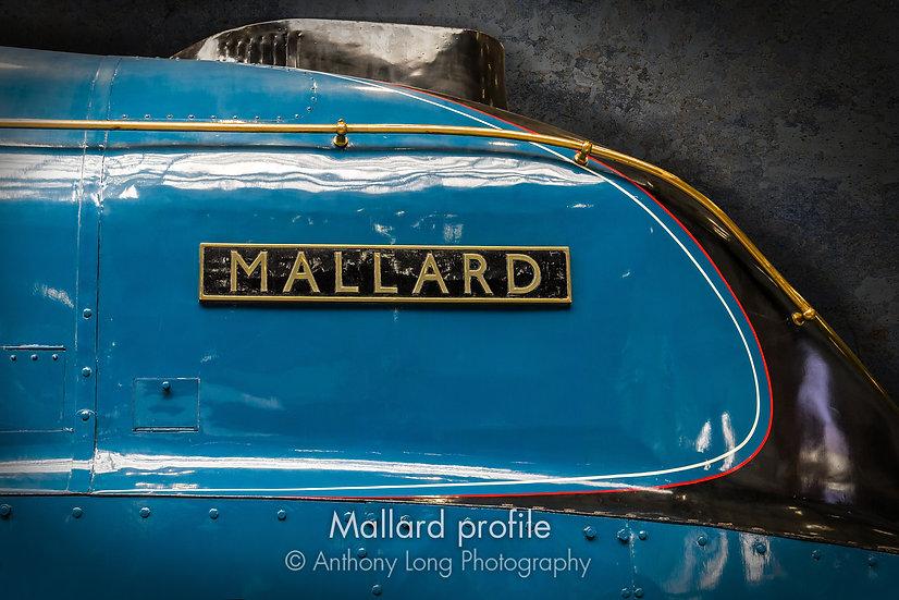 Mallard profile
