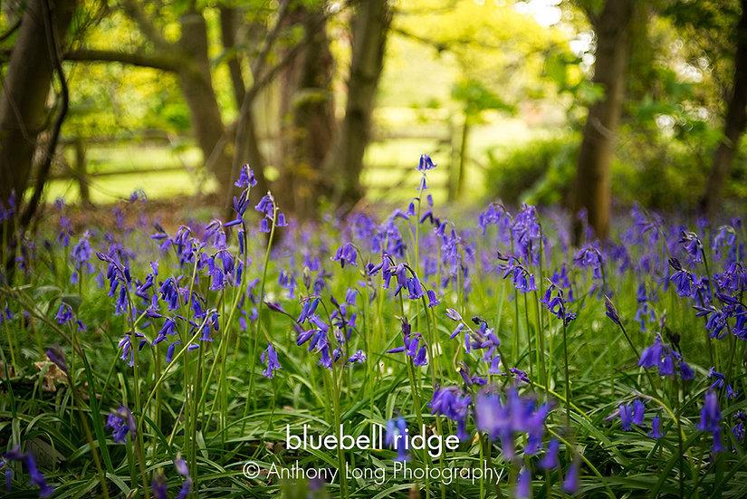 Bluebell ridge