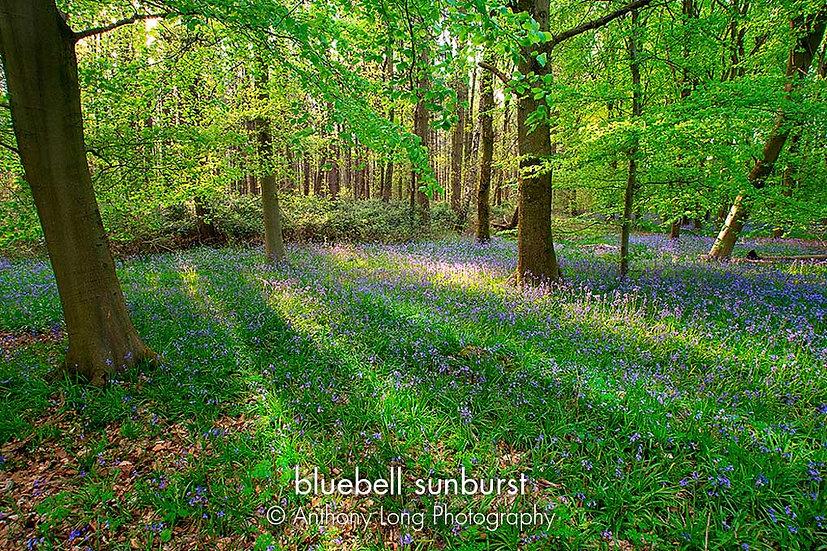 Bluebell Sunburst