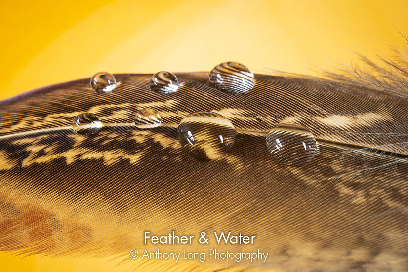 Feather & Water