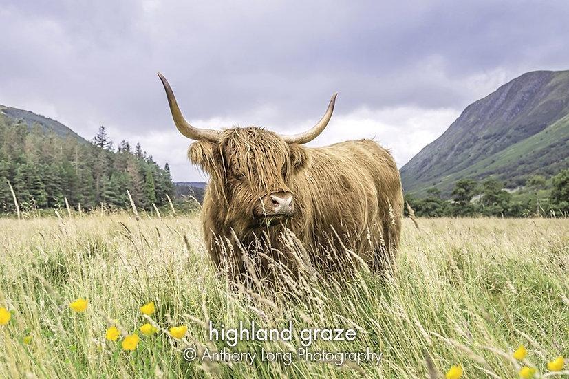 Highland Graze