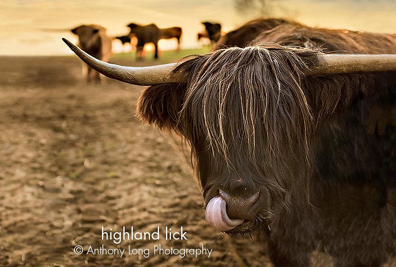 Highland lick
