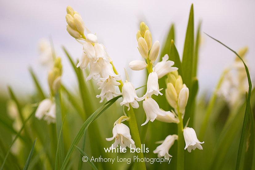 White bells