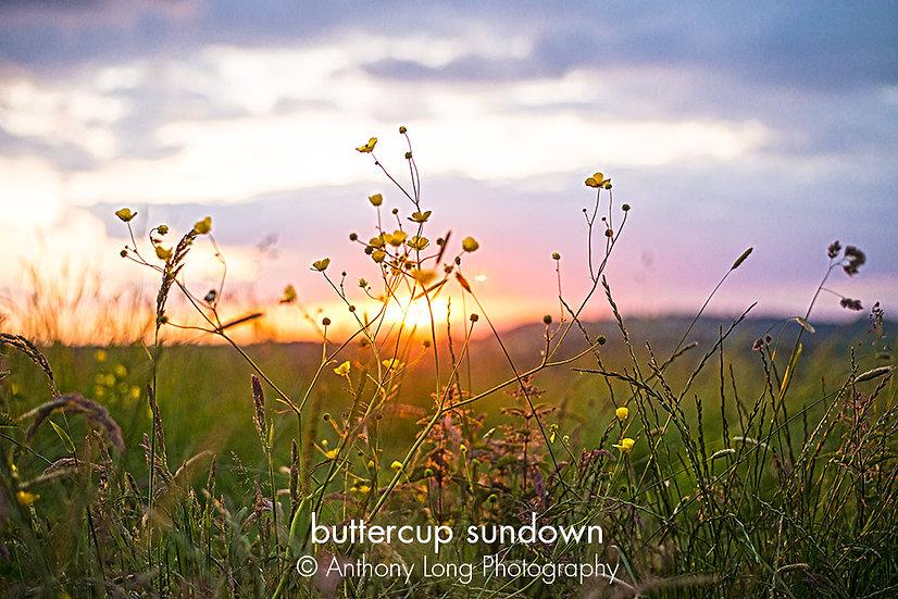 Buttercup sundown