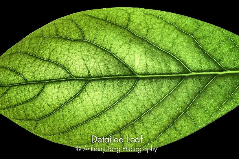 Detailed Leaf