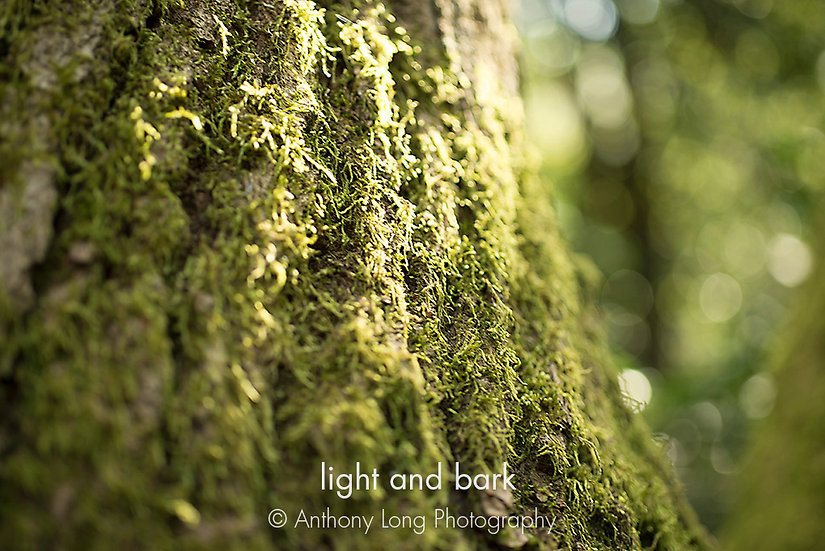 Light & bark