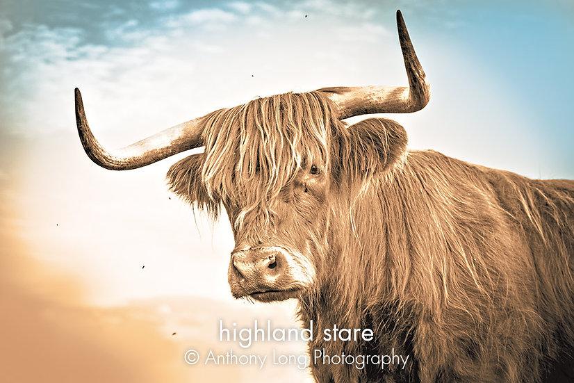 Highland stare