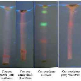 PAINT chromatography