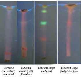 PEINTURE chromatographie