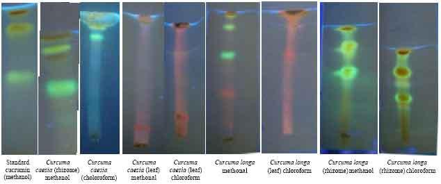 chromatographie chimique