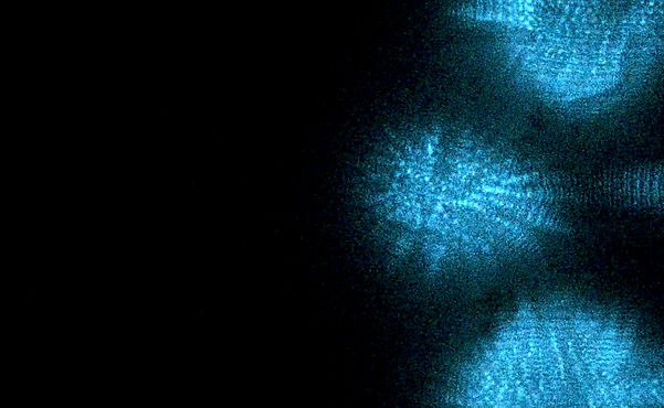 biolumin.jpg