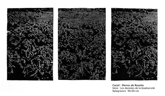 Corail Pierre de Rosette - gravure