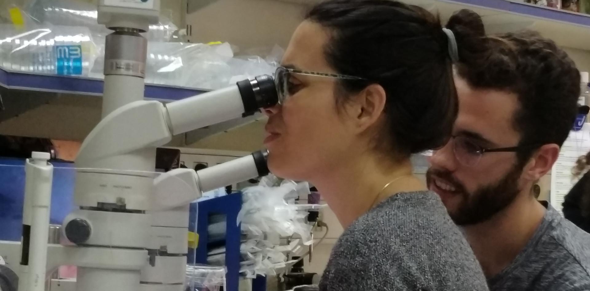 Microscope session