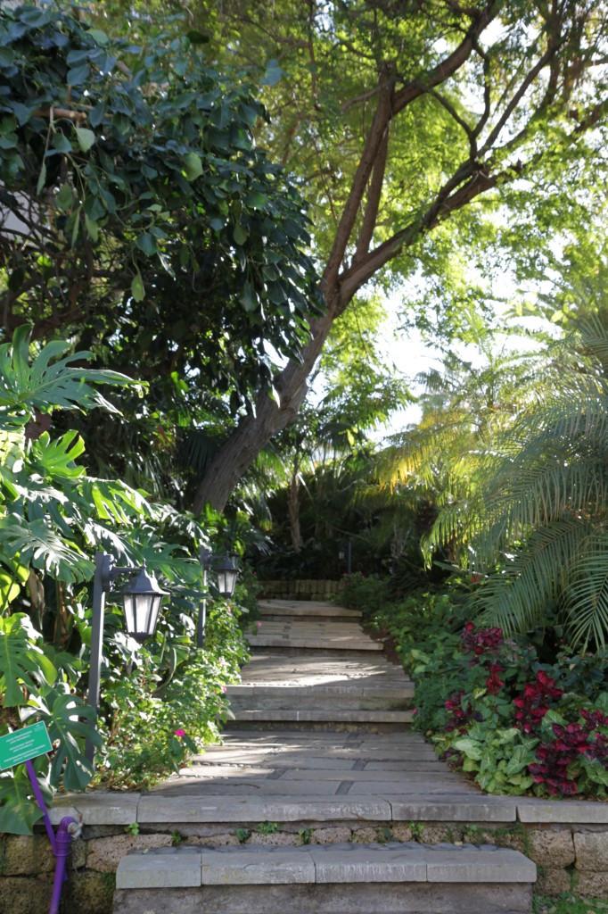 Lush gardens of Hotel Botanico