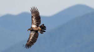 Copyright - Audubon Society