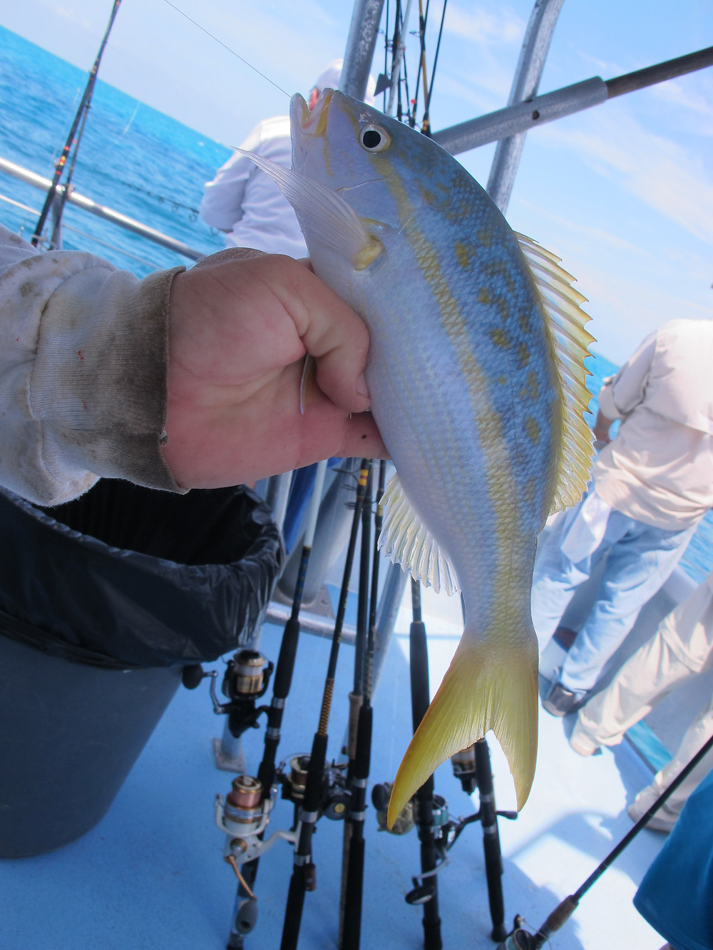 Deep Sea Fishing off of Islamorada. Beautiful fish caught include this Wrasse.