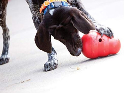 My favorite dog toys for canine enrichment!