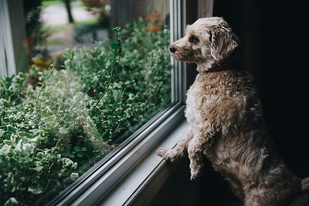 Waiting for humans