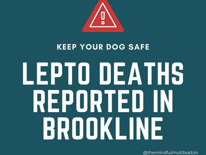 CHECK YOUR VET RECORDS ASAP! Lepto deaths reported in Brookline!