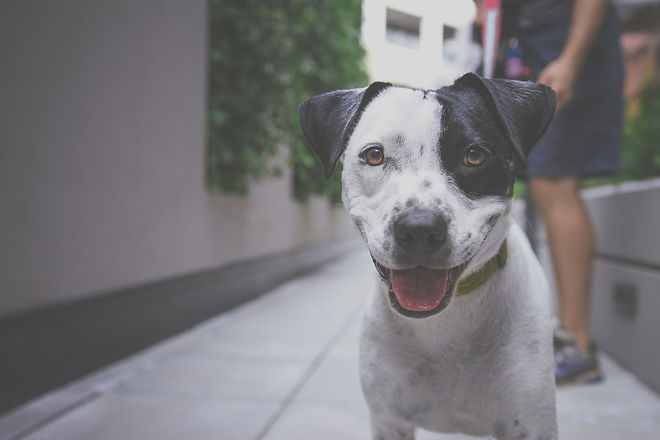 Happy Puppy_edited.jpg