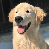 Teddy the Golden.png