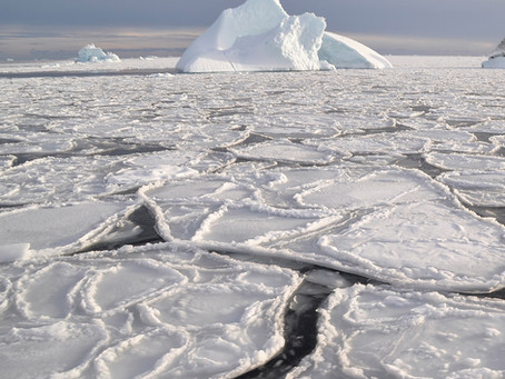 Spring time: sea ice is critical for the greening of the ice-free part of Greenland