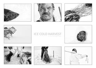 ICE COLD HARVEST