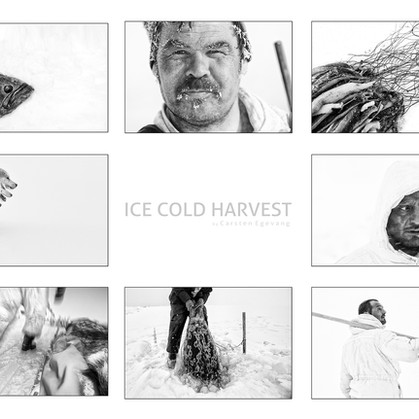 ICE COLD HARVEST