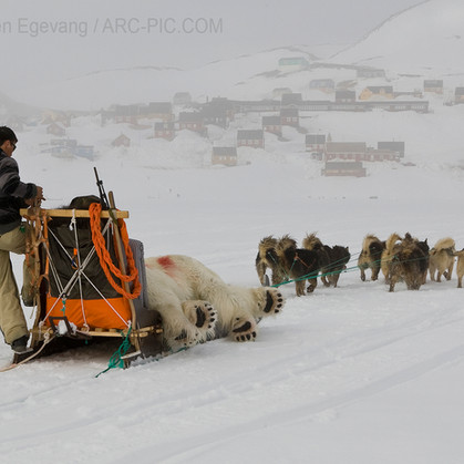 Carsten Egevang awarded in European Wildlife Photographer of the Year